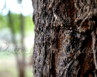 Barking Up the Tree Photography Print