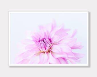 Dahlia, Dahlia Flower Photo, Printable Photo, Botanical Photo, Modern Photo Art, Instant Digital Download, Photo Download, Instant Download