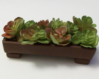 succulent rectangle planter for Fairy or miniature gardens and terrariums