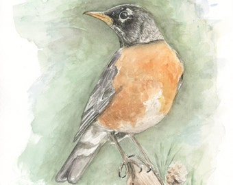 Robin Bird Watercolor Original Painting Archival Print