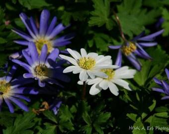 Flower note card, blank note card, Flower blank note card, Flower photography, photo note card, nature note card, nature photograhy, Flowers