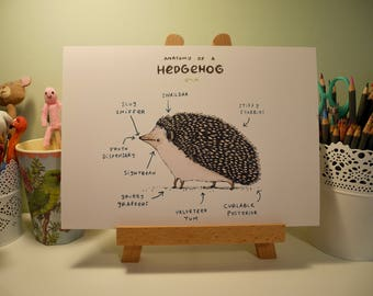 Anatomy Of A Hedgehog A4 Signed Print
