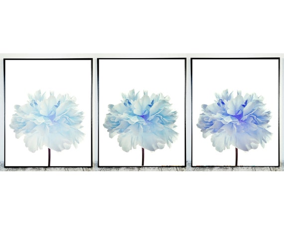 Set of 3 Flowers Prints in Blue