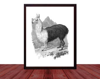 Llama Wall Art Printable Digital Download, Vintage Llama Wall Decor, Boho Chic Home Decor, Traveler Llama Room Decor