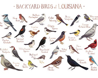 Louisiana Backyard Birds Field Guide Art Print / Watercolor Painting / Wall  Art / Nature Print