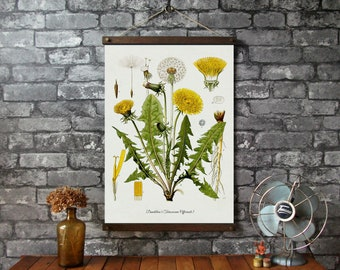 Dandelion Botanical Chart / Wood Poster Hangers with Canvas Fabric Print / Pull Down Chart Vintage Reproduction / Wall Hanging /Brass