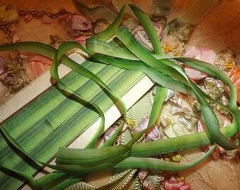 "Antique French Silk Ombre Green Ribbon Trim Ribbonwork ~ Half Yard ~ 1/4"" wide"