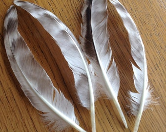 Lot 5 - 4 Pcs, Real, Natural Black and White Wing Bird Feathers, Feathers Australia, Craft Feathers