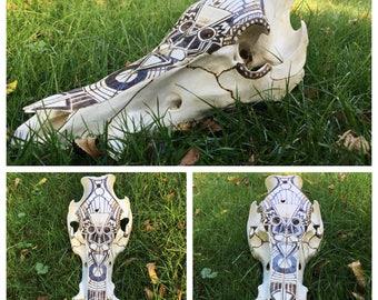 Boar pyrography skull