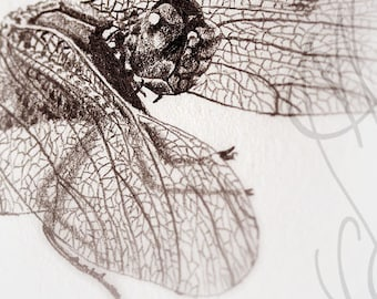 "Martinefa's original drawing presented in hand personalised frame - Dragonfly ""Libellule-1"""