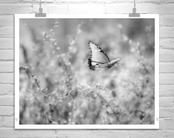 Butterfly Picture, Black and White Butterfly Art, Butterfly Gift, Butterfly Print, Insect Art, Butterfly Decor, Butterfly Photography