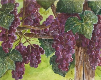 "watercolor ""Vineyard"" watercolor art print -grapevines"