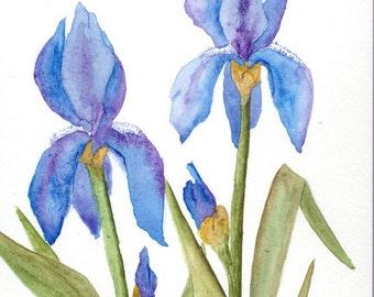 watercolor spring IRIS blues SFA original painting