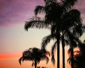 Sunset Palm Tree Canvas, Original Work Taken in Tampa Florida