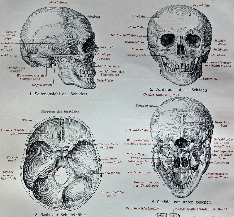 Beste Basis Des Schädels Anatomie Galerie - Anatomie Ideen - finotti ...