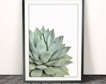Agave print, succulent print,Cactus Print Cactus, Botanical Print, Cactus Art, Cactus Wall Art,Agave Art,Wall Decor,Plant Decor