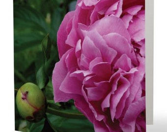 Peony - single blank card, Gifts for her, Gifts for mom, Gifts for nature lovers, Gifts for gardeners