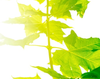Fine art photography, photography prints, download, printable art, wall art, nature, plant