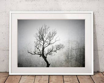 Tree Photography, Nature Art Print, Landscape Photo, Large Wall Art Tree Decor, Moody Art Modern Art Printable Poster Instant Download