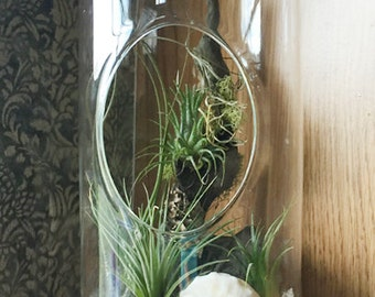 Large Capsule Glass Orb Tillandsia Terrarium by Zentilly©