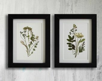 Framed Set of 2 herbarium botanical prints artworks Real pressed flowers Modern wall art Dry flower decor Unique art set framed wall art