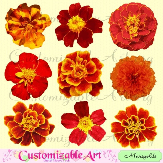 Marigold clipart digital flower clip art tagetes flower red marigold clipart digital flower clip art tagetes flower red fiery yellow bright colored flower clipart printable realistic images graphics mightylinksfo Images