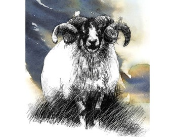 Swaledale Ram | Limited edition fine art print from original drawing. Free shipping.
