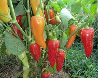Pepper Single seed pack