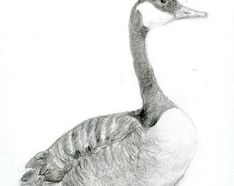 Kanada-Gans Originalzeichnung - Vogel Kunst in Bleistift