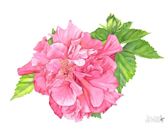 Hibiscus watercolour painting print, 5 by 7 size. H10616. Hibiscus painting. Hibiscus print. Botanical wall art. Botanical print.
