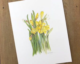 Daffodils - Original Color Pencil
