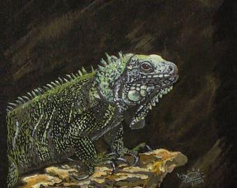 Green Iguana Print