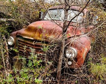 1948 Studebaker 2R5 Truck the Woods Photograph