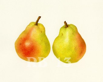 Bartlett Pear Duo, 12x8 in. Limited Edition Giclee Print (6/50)