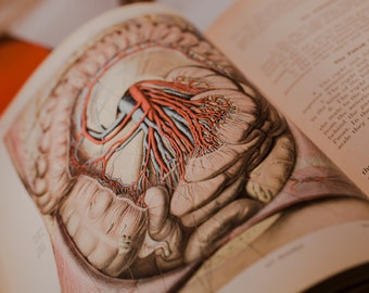 1930, Atlas of Human Anatomy by Dr. Johannes Sobotta. Corrected edition. Two books, volumes I and III.