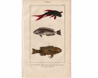 1830 antique FISH ENGRAVING original antique marine animal print of POISSONS