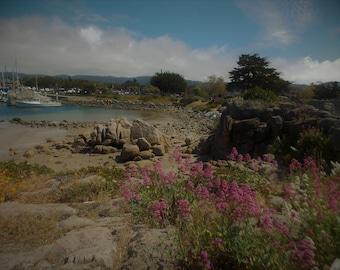 Monterey Nature