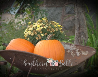 Holiday Pumpkins Pictures