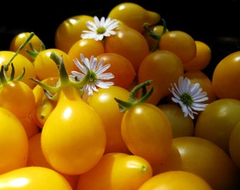 VTCP) YELLOW PEAR Cherry Tomato~Seeds!!!!!!~~~~~~Soooo Sweet!!!