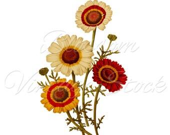 Daisies, Floral Art, Vintage Print, Floral Bouquet, Digital Image, Vintage Illustration for Print, Digital Artwork- INSTANT DOWNLOAD - 1812