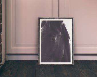 Black horses fine art print photography for nature lovers and home decor
