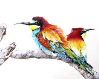 Bee eater drawing
