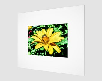 Pollen Picker Fine Art Print