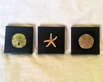 Set of 3 Sustainably collected sand dollar, starfish, and sea urchin on canvas