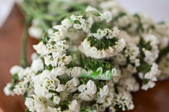 White statice bunch white dried statice white wedding white dried 1695 mightylinksfo Images