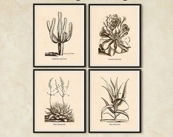 Succulent print set, Antique botanical print set, Art print vintage, Set of 4 prints, Digital botanical print, Succulent, Printable art, JPG
