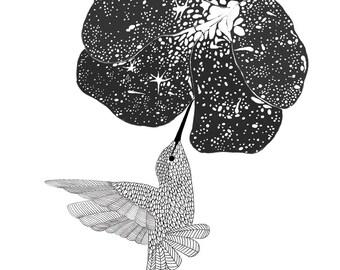 Hummingbird and Cosmic Flower,line art, print of orginal drawing