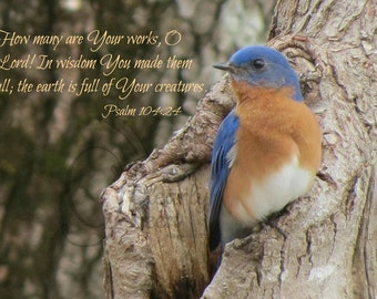 5. Bluebird on Tree; Photo Greeting Card; Nature art print; Gift; Inspirational Scripture Psalm 10:24
