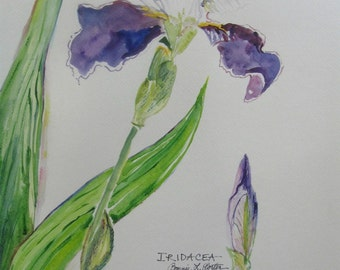 Iris Botanical Original Watercolor