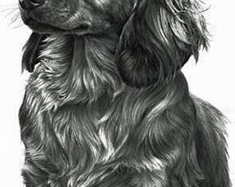Dachshund (Long Haired) , Fine Art Print by Mike Sibley